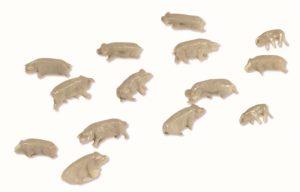 n gauge pigs